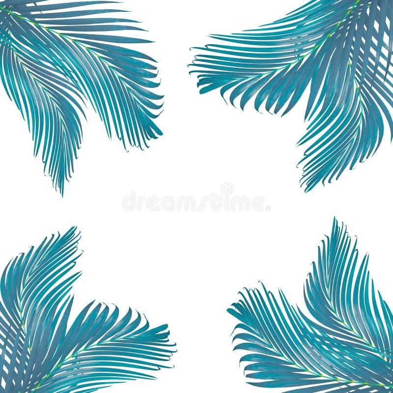 marco para el texto hecho de la hoja de palma verde aislada imágenes de archivo libres de regalías