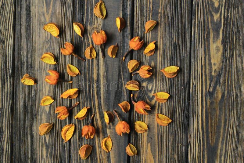 Marco para texto y flores secas de hibisco fotos de archivo libres de regalías