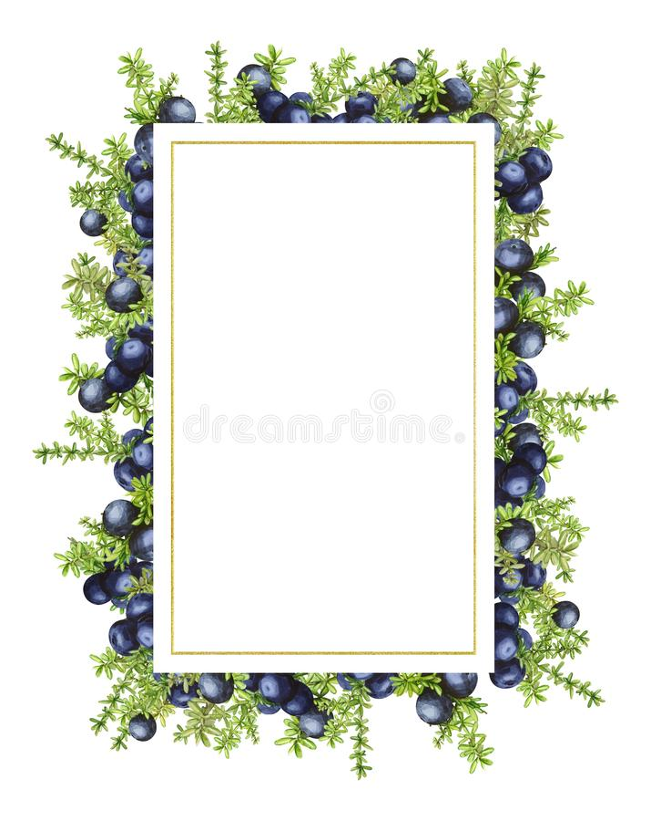 Marco rectangular con las bayas septentrionales del bosque negro del crowberry, pintadas en acuarela Ideal para casarse fotografía de archivo