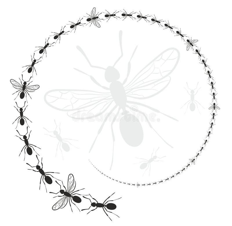Marco redondo con las hormigas libre illustration