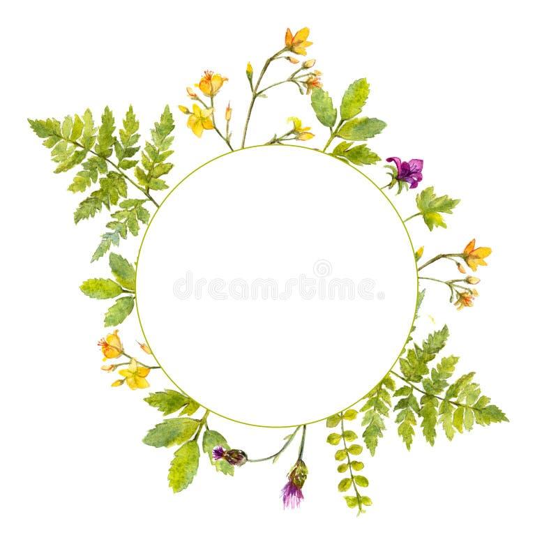 Marco redondo con las plantas verdes de la acuarela y las flores salvajes pintadas La naturaleza inspiró la frontera para los cos libre illustration