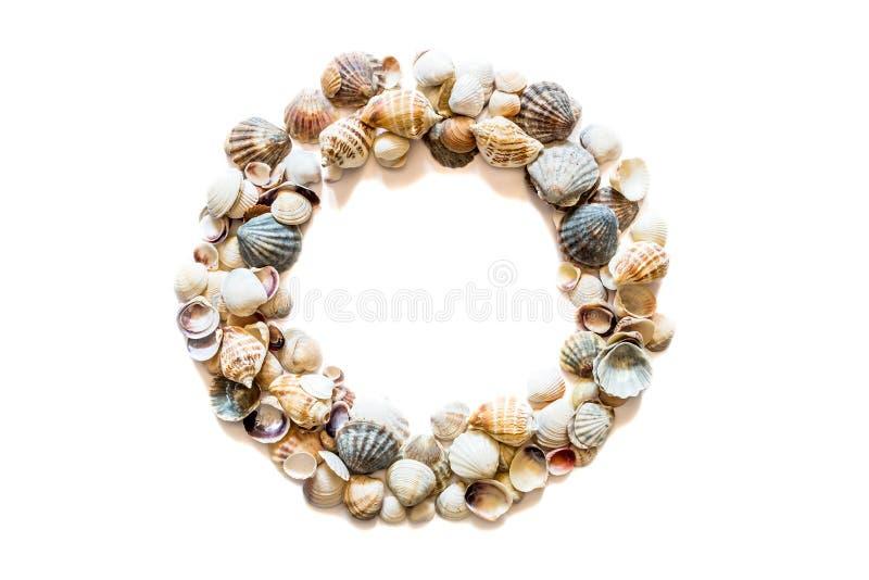 Marco redondo del c?rculo de diversas conchas marinas aisladas en el fondo blanco con el espacio para el texto Textura de la conc imagenes de archivo