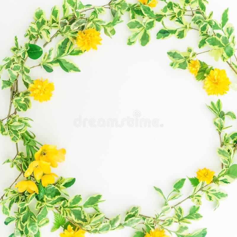 Marco redondo floral hecho de ramas con las hojas y las flores amarillas en el fondo blanco Endecha plana, visión superior imagen de archivo