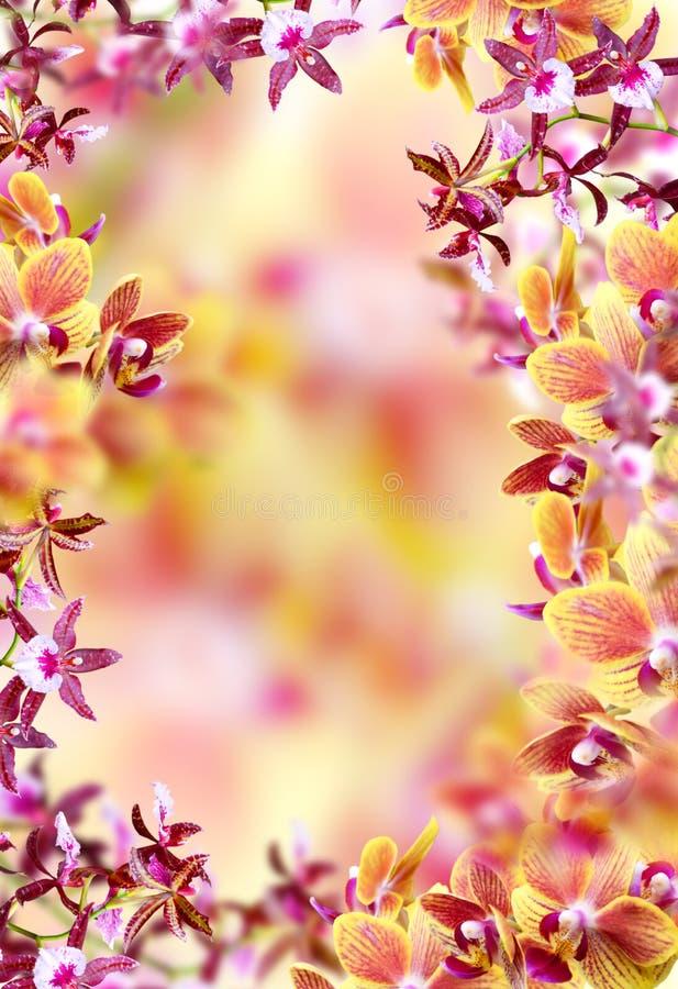 Marco rojo de la orquídea imágenes de archivo libres de regalías
