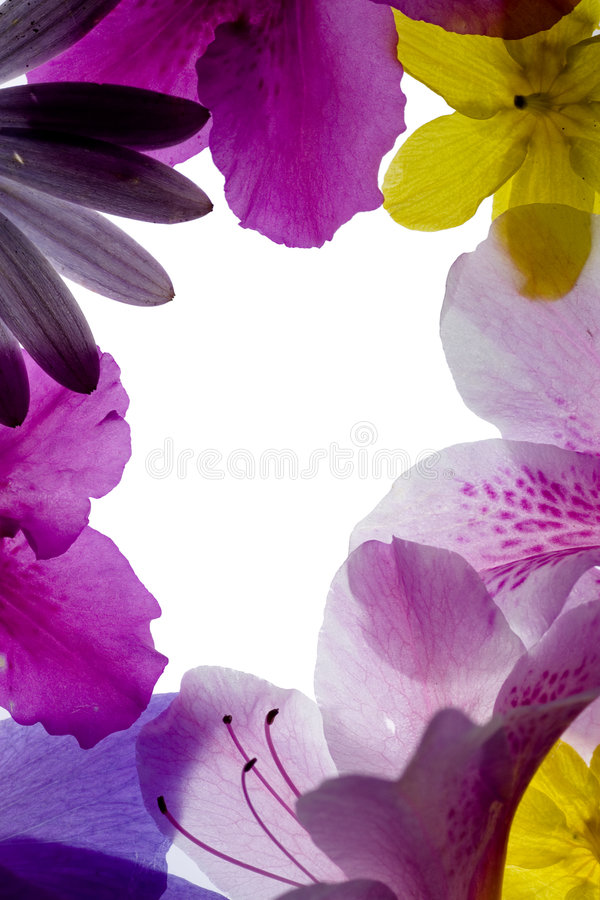 Marco rosado de la flor foto de archivo libre de regalías