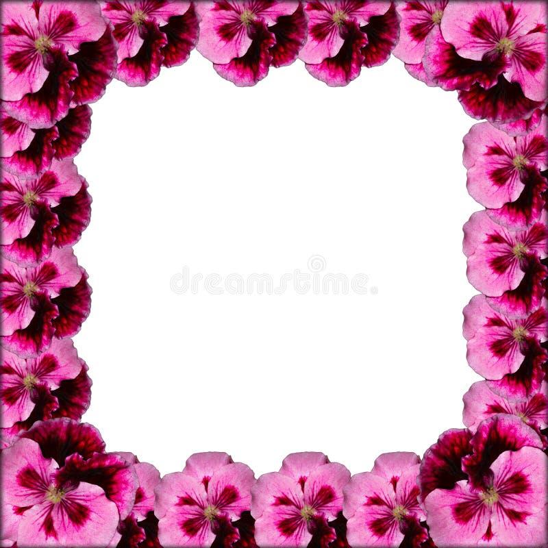 Marco rosado de la flor imagen de archivo libre de regalías