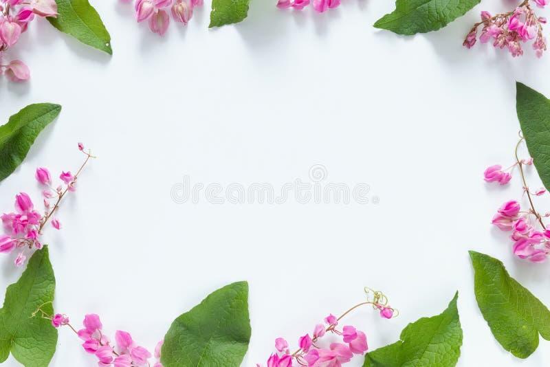 Marco rosado de las flores con licencia verde en el fondo blanco con el espacio de la copia para el mensaje de saludo Endecha pla imágenes de archivo libres de regalías
