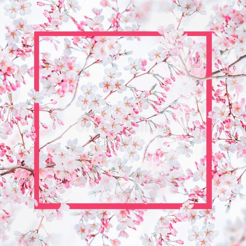 Marco rosado en el fondo de la naturaleza de la primavera con el flor blanco rosado de cerezos Naturaleza de la primavera libre illustration