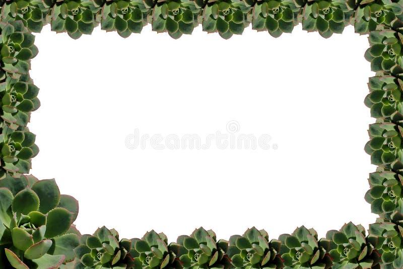 Marco suculento de la planta ilustración del vector