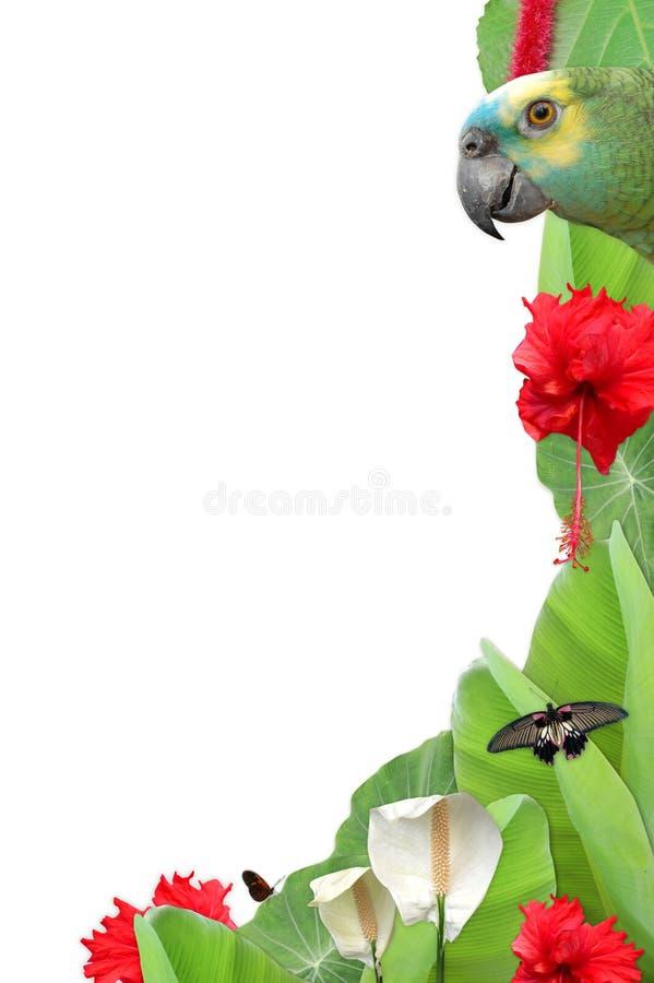 Marco tropical de la selva fotos de archivo libres de regalías