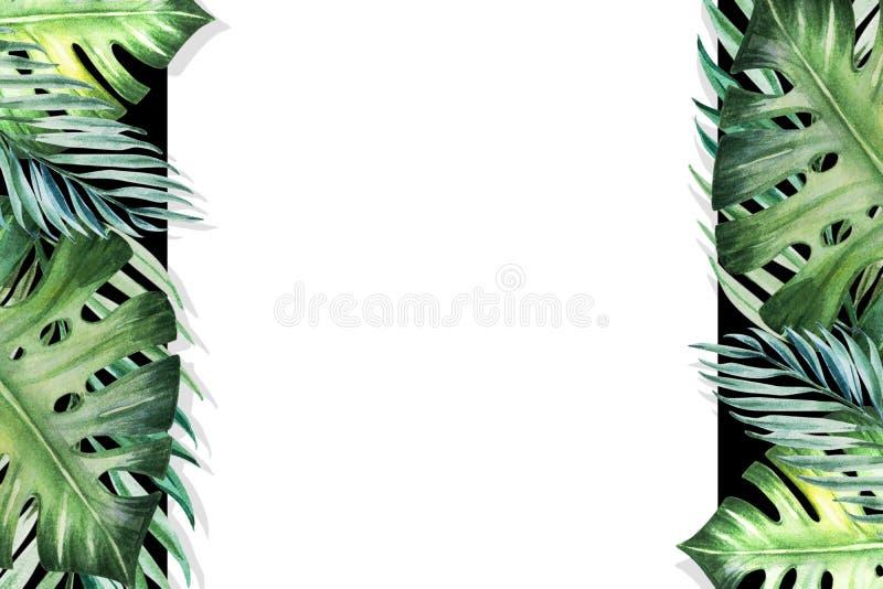 Marco tropical hermoso de la frontera de las hojas Monstera, palma Pintura de la acuarela Libro Blanco en el contexto negro libre illustration