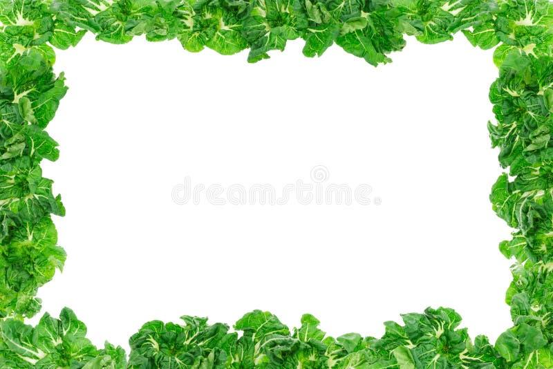 Marco vegetal libre illustration