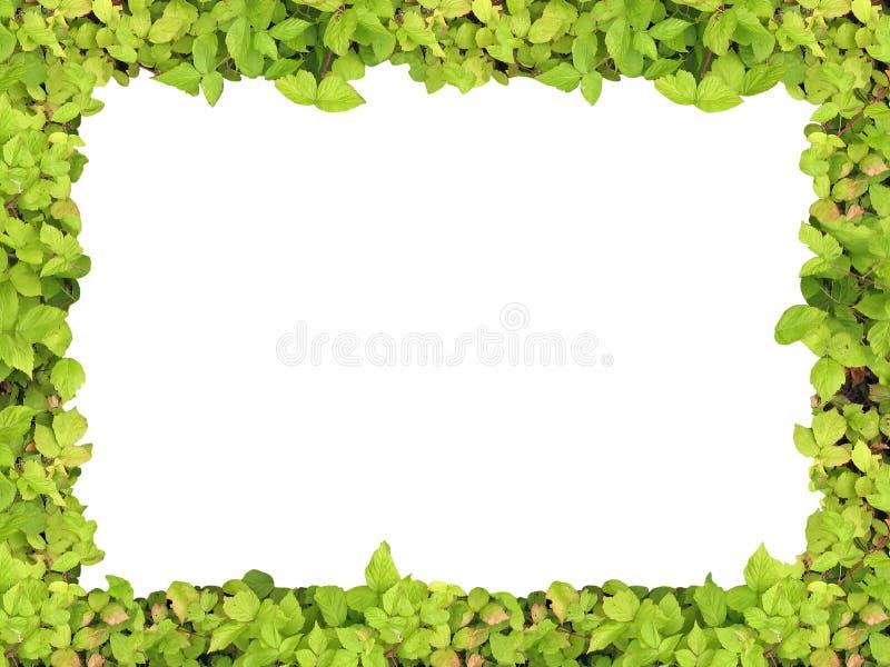 Marco verde imágenes de archivo libres de regalías