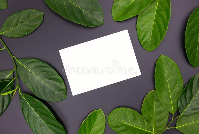 Marco verde de la hoja y tarjeta blanca en fondo negro Maqueta de la postal del verano Endecha plana de la guirnalda del follaje  foto de archivo