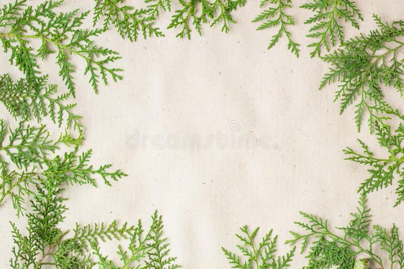 Marco verde de las ramas de árbol del thuja en fondo rústico beige fotos de archivo