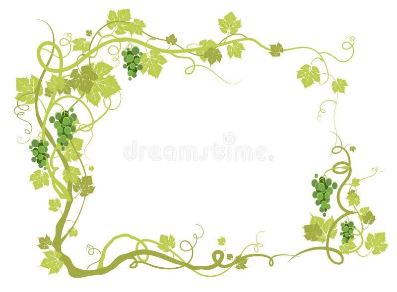 Marco verde del viñedo ilustración del vector