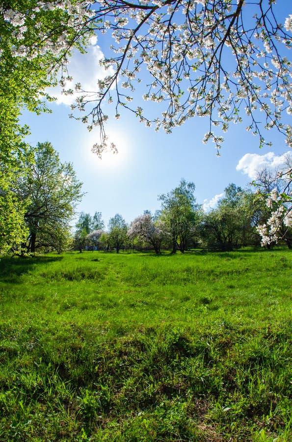 Marco vertical de las ramas de la manzana floreciente y del cielo azul fotografía de archivo