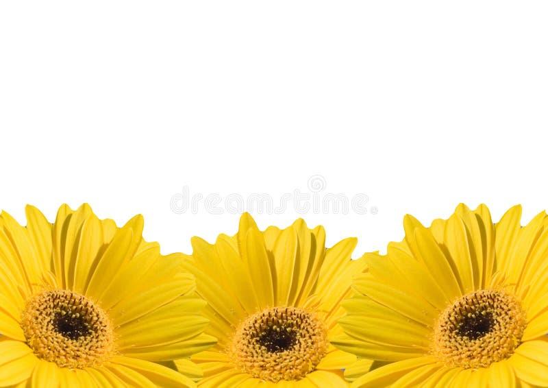 Marcos del fondo de la flor fotos de archivo
