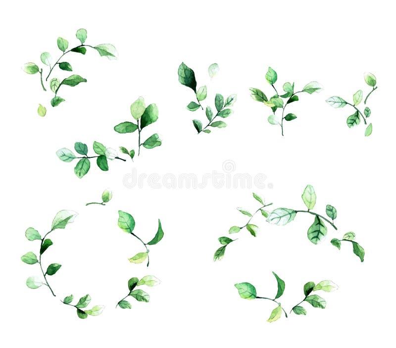 Marcos florales decorativos elegantes con las hojas y las ramas verdes en estilo de la acuarela Perfeccione los elementos del dis ilustración del vector