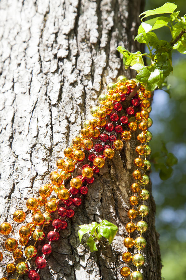 Mardi Gras Beads Hanging from Tree. Red, gold and orange Mardi Gras beads hanging from a tree royalty free stock photos