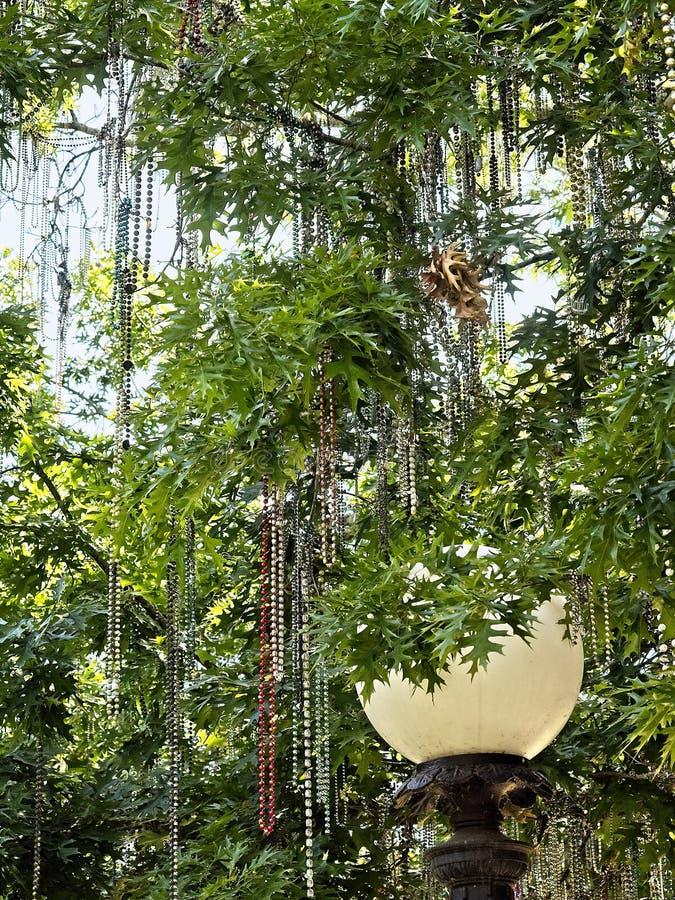 Mardi Gras Beads i träd med gatalampan royaltyfri fotografi