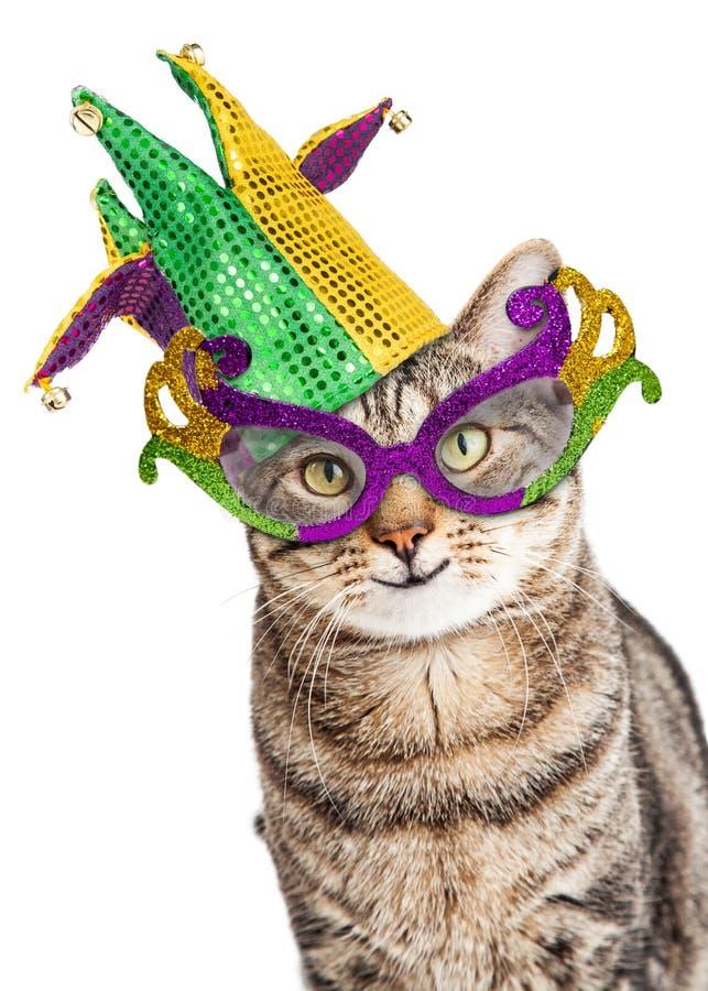 Mardi Gras Cat divertente fotografia stock libera da diritti