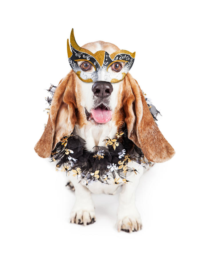 Mardi Gras Dog engraçado fotografia de stock