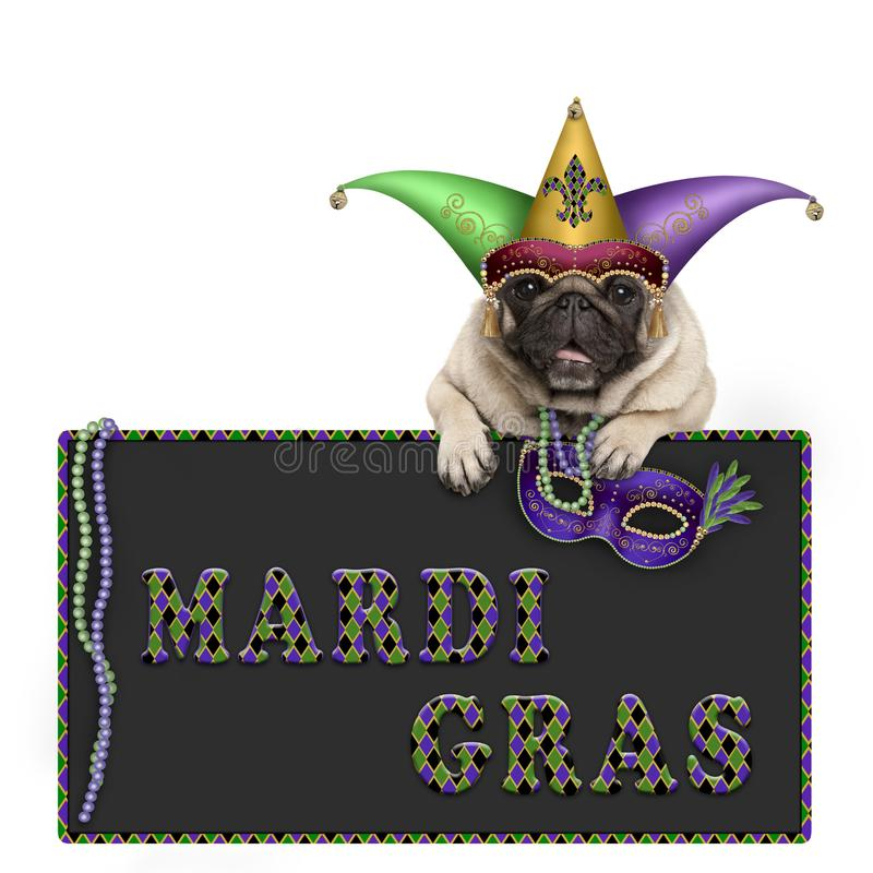 Mardi gras pug dog with carnival hat, beads and venetian mask hanging on blackboard sign with text. Isolated on white background stock photo