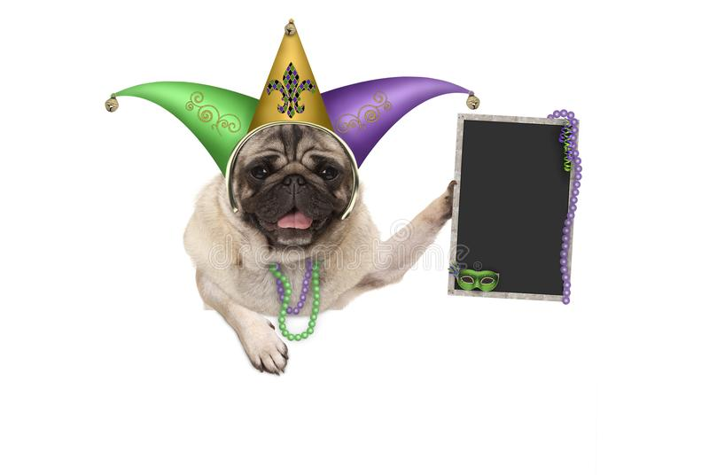 Mardi gras pug puppy dog with carnival jester hat, venetian mask and blank blackboard sign, hanging on white banner royalty free stock photos