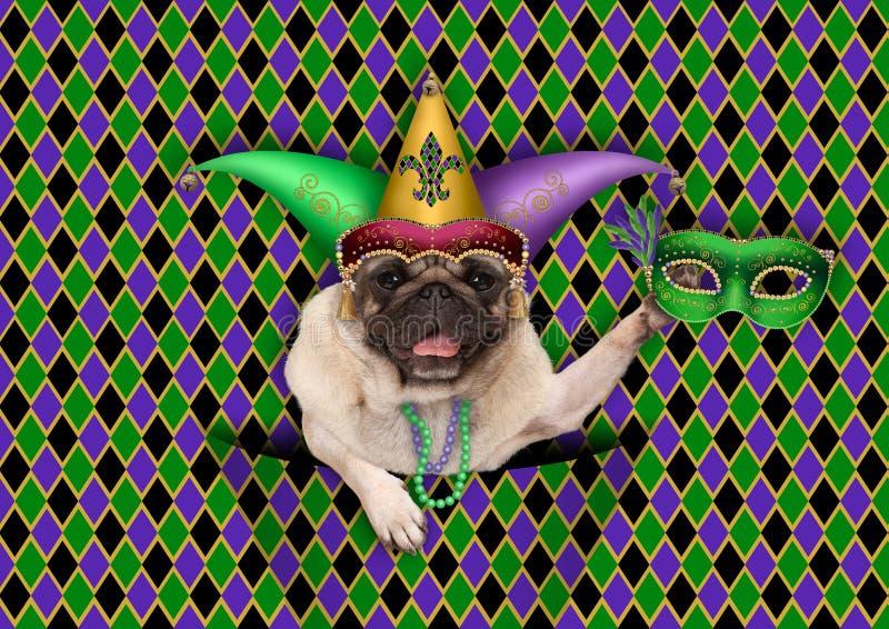 mardigras, vette dinsdag, achtergrond, met harlekijnpug hond die Venetiaans masker houden, die de hoed van de harlekijnnar dragen royalty-vrije stock fotografie