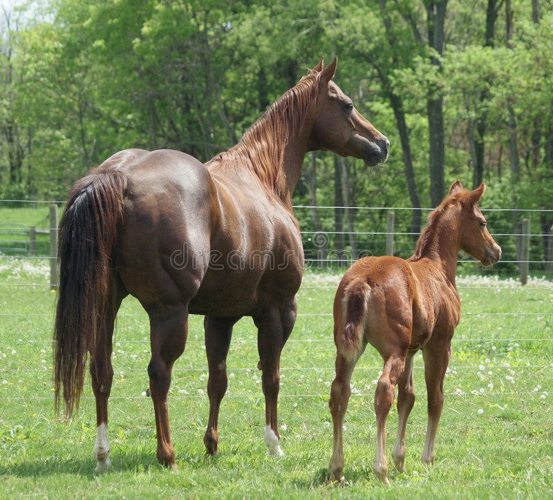 Free Mare And Colt Stock Image - 8770341