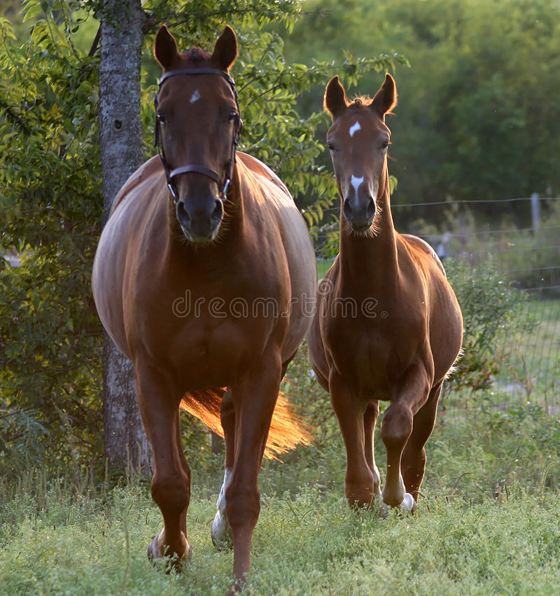 Free Mare And Foal Royalty Free Stock Photos - 31158