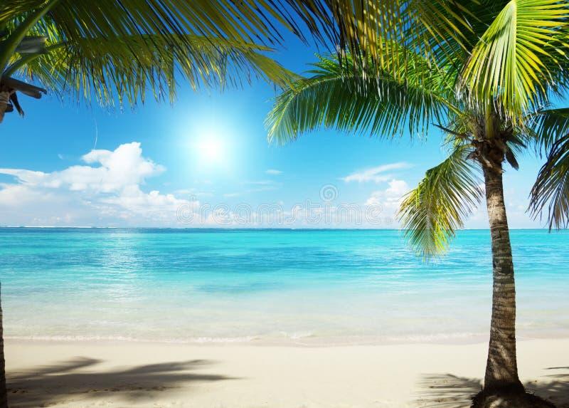 Mare Caraibico E Palme Fotografia Stock Immagine Di Atlantico