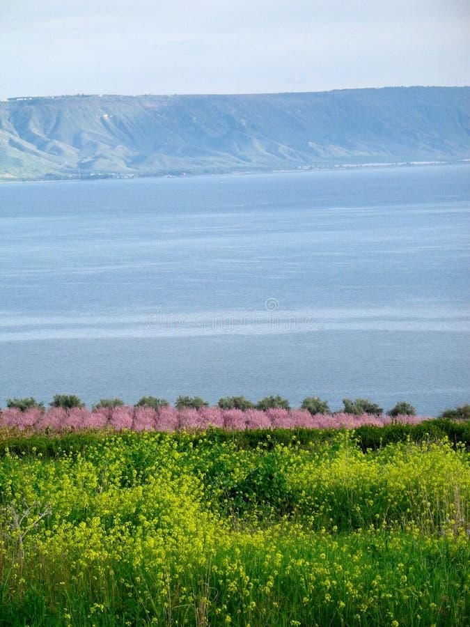 Mare del Galilee immagine stock