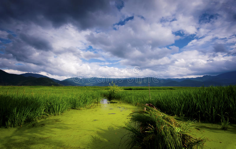 Mare dell'erba del lago Lugu fotografia stock