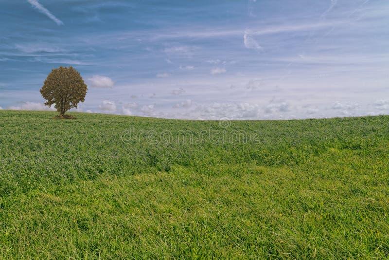 Mare di erba fotografia stock libera da diritti