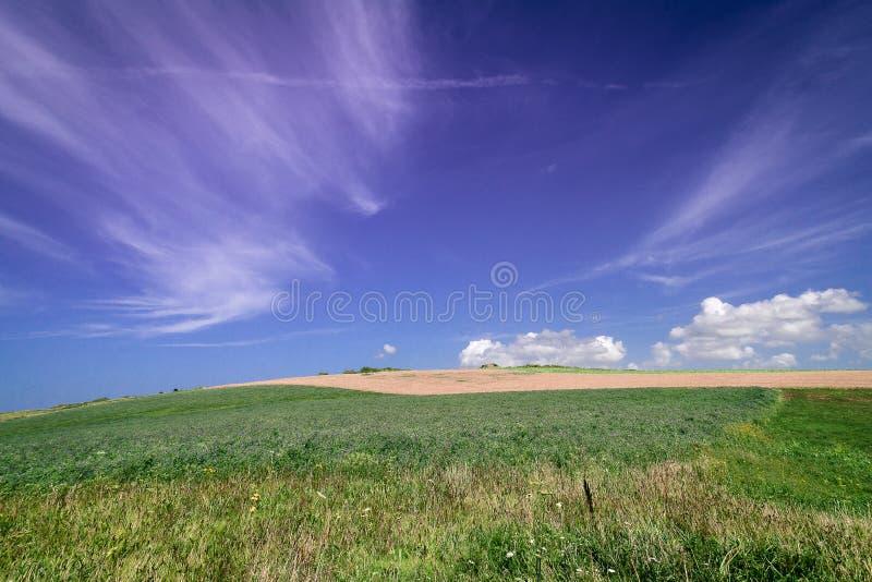 Mare di erba 2 immagini stock