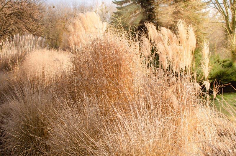Mare di erba decorativa in giardino fotografie stock libere da diritti