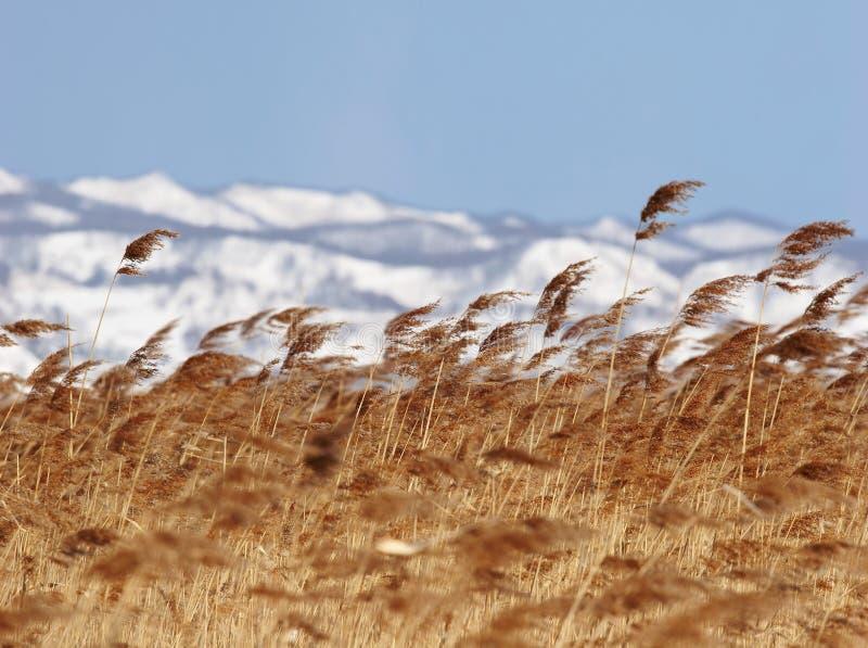Download Mare Di Giappone. Winter.Cane Fotografia Stock - Immagine di turismo, alba: 7319366