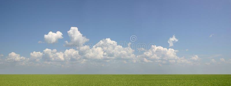 Mare di verde fotografia stock
