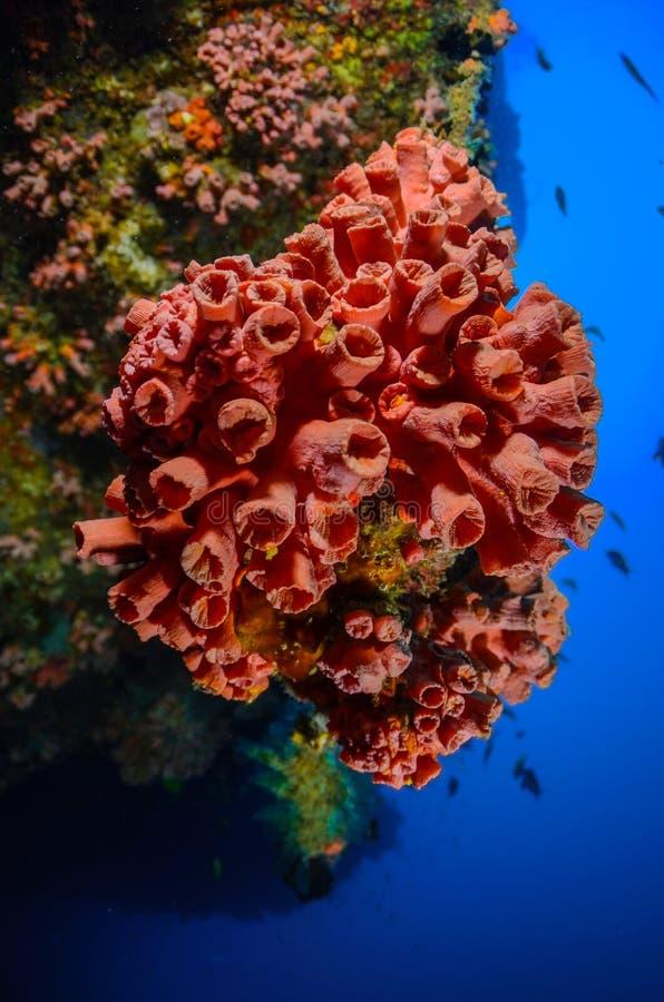 Mare di vita in rosso immagini stock libere da diritti