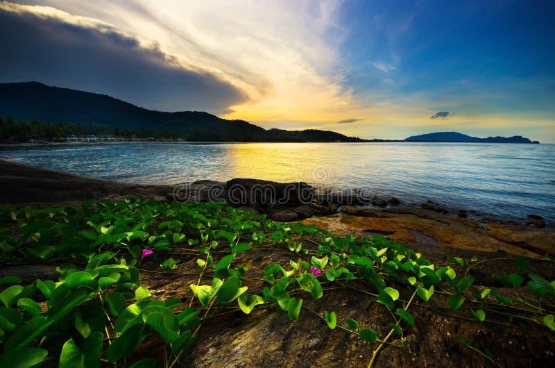 Mare ed erba di sera sulla spiaggia con il tramonto immagini stock libere da diritti