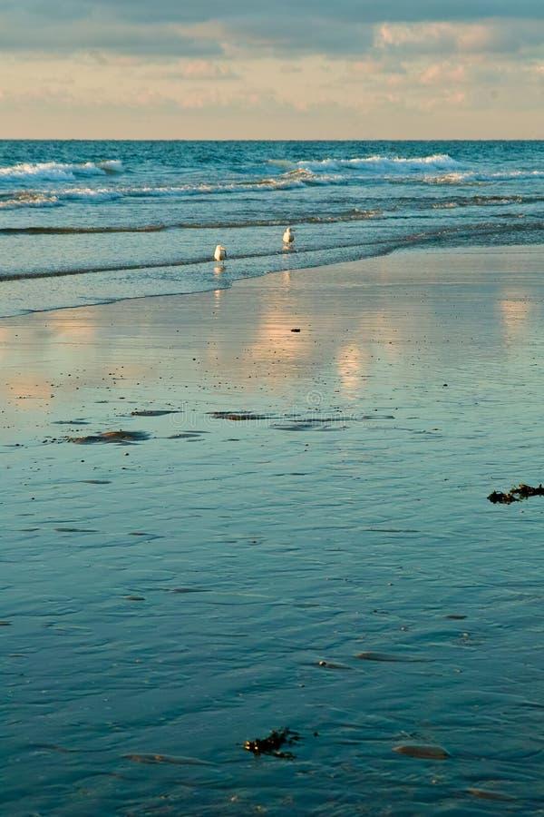 Mare ed i gabbiani immagini stock