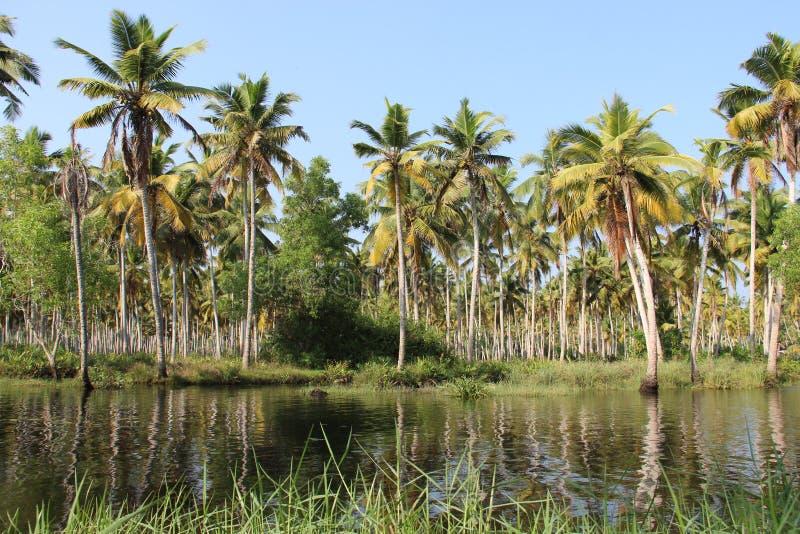 Mare et plantation de noix de coco belle de la nature images stock