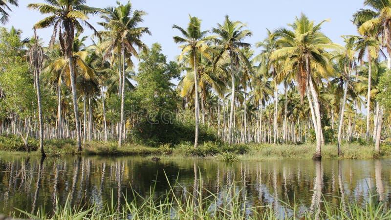 Mare et plantation de noix de coco Place tranquille photos stock