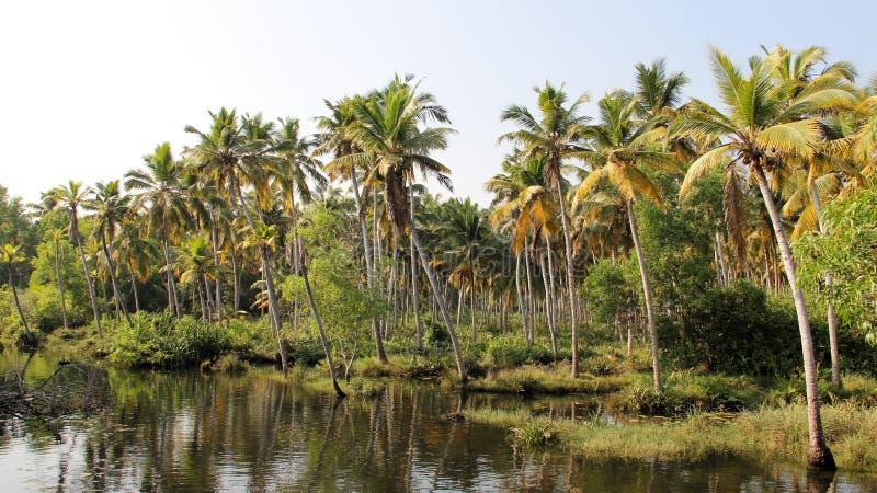 Mare et plantation de noix de coco Places tranquilles images stock