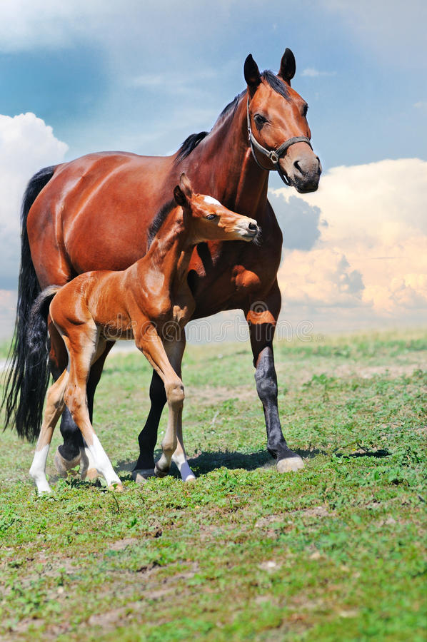 Download Mare and foal stock photo. Image of mother, motherhood - 28127260