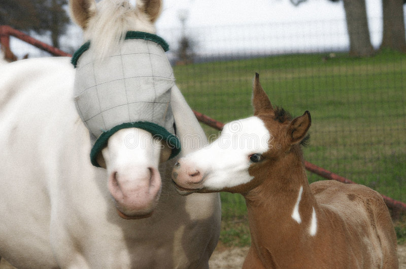 Download Mare and Foal stock photo. Image of mother, broodmare, buckskin - 89830