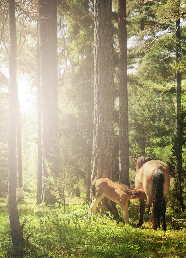 Mare and foal in backlight royalty free stock image