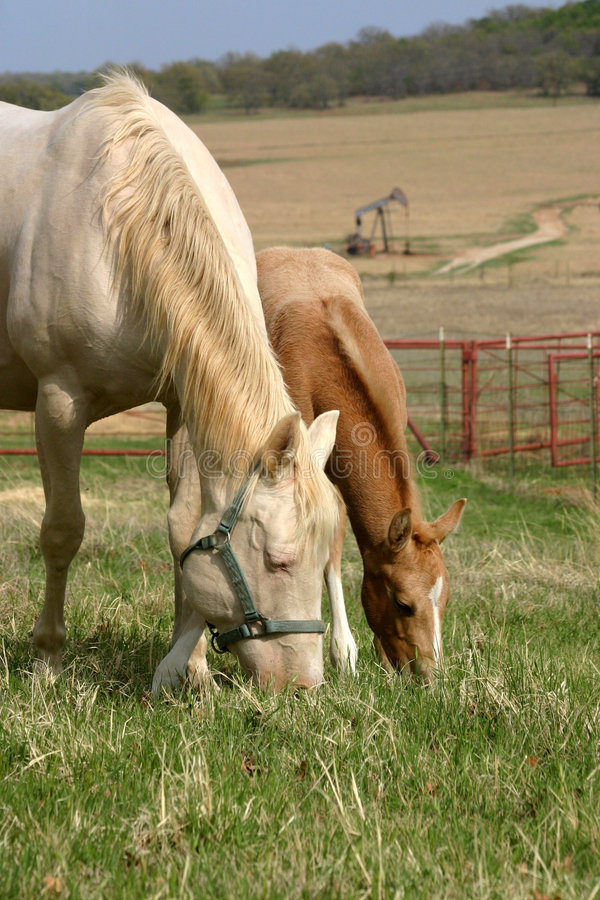 Download Mare and Foal Grazing stock photo. Image of hill, hillside - 645816